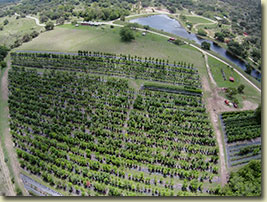 Our Texas Tree Nursery